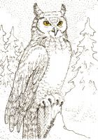 Great Horned Owl ACEO